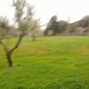 Ampio rustico immerso in terreno pianeggiante