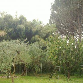 Porzione colonica con ampio giardino