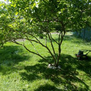 Piano terreno di villa singola con ampio giardino