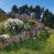 Rustico in 300 mq di terreno con 180 olivi